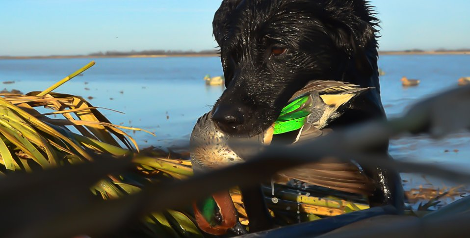 Arkansas duck season dates